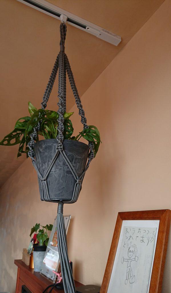 新事務所 観葉植物①